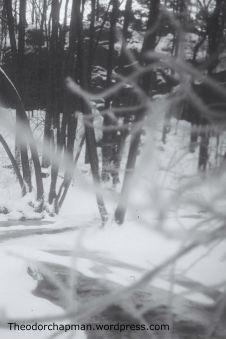 snowy forest-Kristiansand-Norway